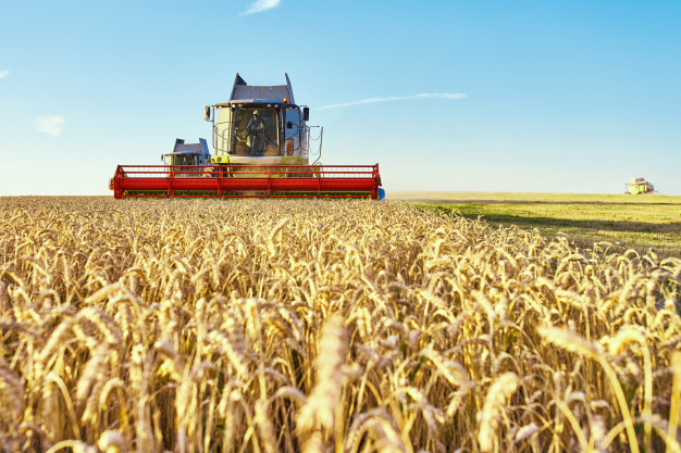 combine harvester harvests ripe wheat 168410 596